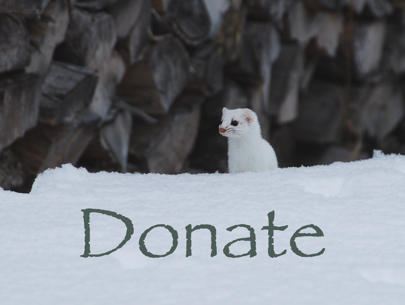 Donate to NorthWoods!