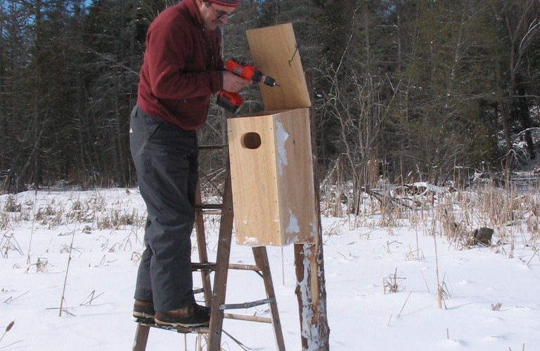 Steve Farrow installing a Wood Duck Box, 2006.